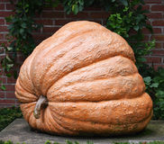 Giant Orange Pumpkin Stock Photos
