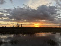 Sunset in the swamps. Giant orange sun sets behind the bayou of a cypress swamp and reflects in the river royalty free stock images