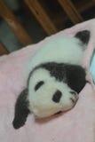 Giant panda bear (cub). New born panda cubs in bed Stock Photo