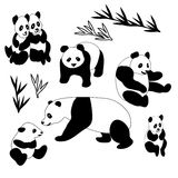 Giant Panda Collection Royalty Free Stock Photography