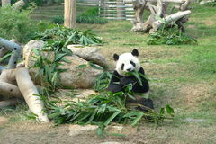 Giant Panda Pavilion in Coloane Macau Royalty Free Stock Image