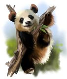 The giant Panda on the tree. Watercolor painting Stock Photography