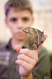 Giant Peacock Moth on child's finger Royalty Free Stock Photos