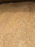 Giant Pile of Wood Chips Royalty Free Stock Photo
