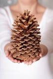 Giant pine cone Stock Image
