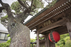 Pine, temple gate Stock Images