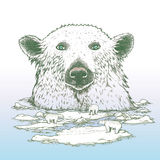 Giant polar bear of arctic Stock Photography