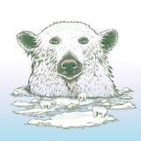 Giant polar bear of arctic Stock Photography