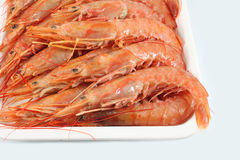 Giant prawns Stock Photos