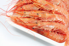 Giant prawns Royalty Free Stock Images
