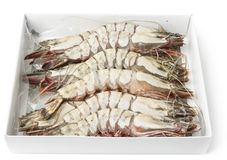 Giant prawns in retail pack, isolated on white Royalty Free Stock Photos