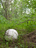 Giant puffball royalty free stock image