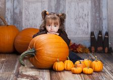 The Giant Pumpkin Royalty Free Stock Images