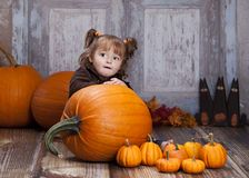 The Giant Pumpkin Stock Image