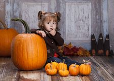 The Giant Pumpkin Royalty Free Stock Image