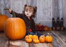 Giant pumpkin Royalty Free Stock Photos