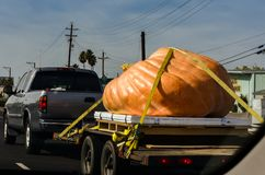 Giant pumpkin carried on a truck for halloween, usa