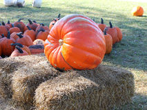 Giant pumpkin Royalty Free Stock Photography