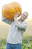 Giant pumpkin harvest Stock Photos
