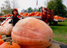 Giant pumpkin, little boy royalty free stock photography