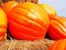 Giant pumpkin Stock Photo