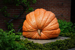 Giant Pumpkin Statue Stock Photo