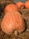 Giant pumpkin on straw. Stock Images