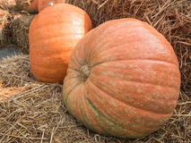 Giant pumpkin on straw. Stock Photo