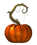 Giant pumpkin on a twisted vine Royalty Free Stock Photography