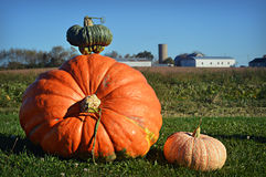 Giant Pumpkin Royalty Free Stock Photo