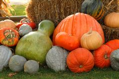 Giant pumpkins and gourds. Against hay bale in morning light Royalty Free Stock Photography