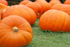 Giant pumpkins Stock Image