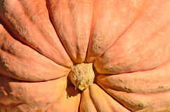 Giant Pumpkins royalty free stock photos