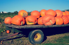 Giant Pumpkins on a Trailer Royalty Free Stock Photo