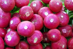 Giant radish Stock Images