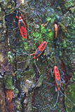 Giant red bug Stock Images