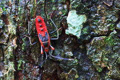 Giant red bug Royalty Free Stock Photo