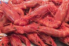 Giant red prawns (Aristaeopsis edwardsian) stock photo