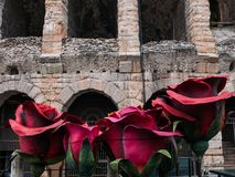 Giant red roses in front of the Verona Arena, a symbol of love, ideal to represent the concept of love. Shakespeare royalty free stock photography