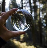 Giant Redwood Forest with Light Coming Through Trees Captured in. Giant Sequoia Redwood Trees captured in glass ball held in hand with light coming through trees stock images