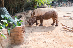 Giant rhino in zoo Stock Image
