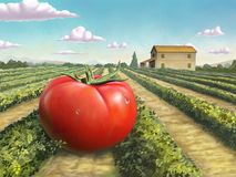 Giant ripe tomato. In a rural landscape. Digital painting vector illustration