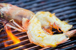 Giant river prawn  grilled Royalty Free Stock Images