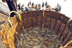Giant river prawn (Macrobrachium rosenbergii) Stock Photography