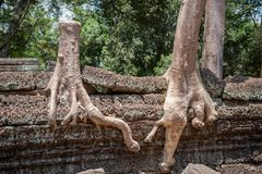 Ta Prohm in Siem Reap, Cambodia Royalty Free Stock Image