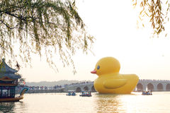 Giant Rubber Duck Debuts in Beijing Stock Photography