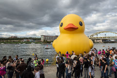 Giant Rubber Duck in Pittsburgh Royalty Free Stock Image