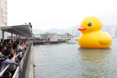 Giant Rubber Duck Visits Hong Kong Stock Image