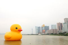Giant Rubber Duck Visits Macau Royalty Free Stock Image