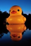 The Giant Rubber Duck Royalty Free Stock Photo